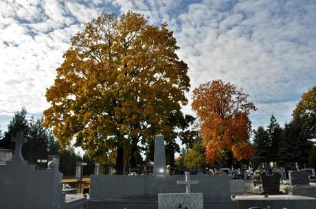 Galeria Cmentarz - mogiły po renowacji